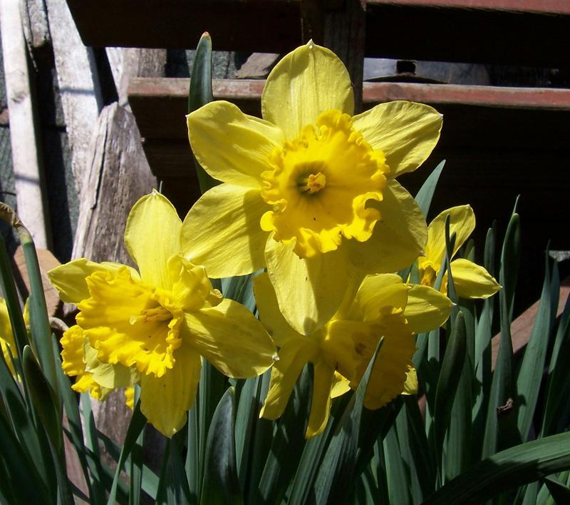 fleurs mars