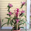 plante-et-fleur