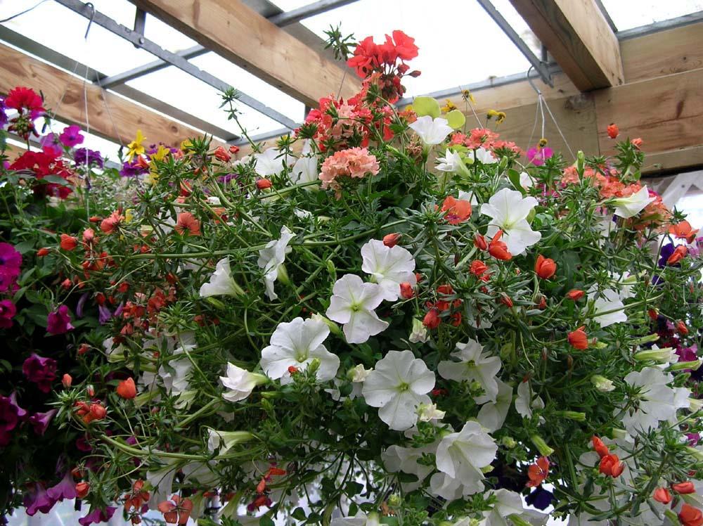 Pot de fleurs, jardinire, poterie dcorative - Fontaine, bassin et