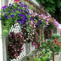 jardiniere-3